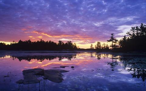 在日落的杂草丛生的湖