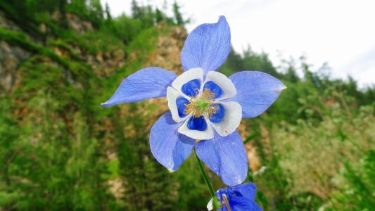 花与蓝白色的花瓣