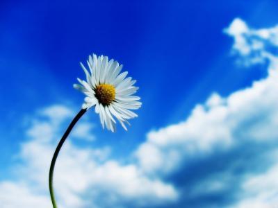 反对天空的白花