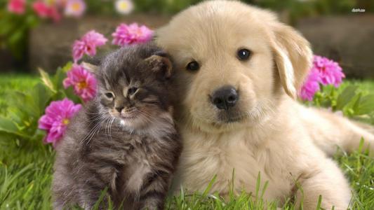 与小猫的猎犬小狗