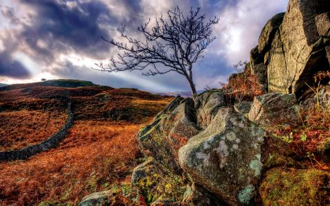 树在岩石中