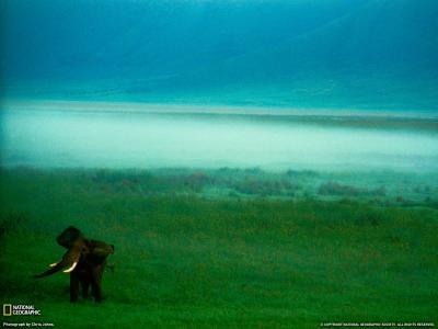 大象在雾中