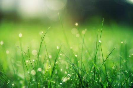 清新养眼绿叶唯美意境