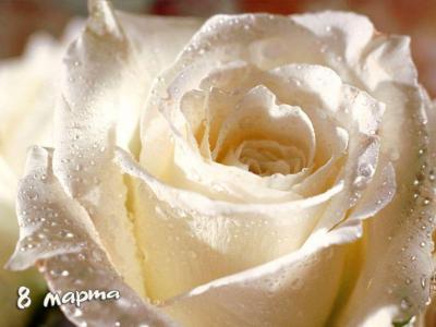 玫瑰3月8日
