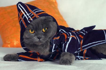 英国猫在服装