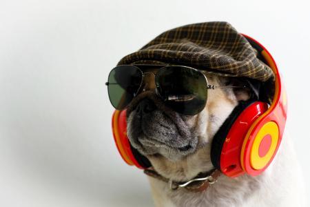 戴着耳机,眼镜和一顶帽子的英国牛头犬
