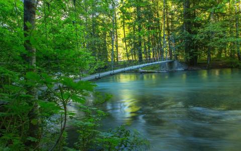 在森林里的河上的绳桥