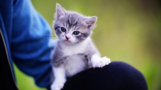 小巧可爱的猫咪