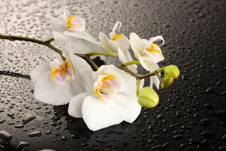 美丽的白色兰花花湿黑色表面上