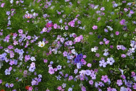 美丽的野花和蓝色的矢车菊