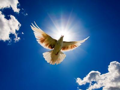 天堂里的鸽子