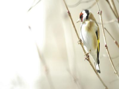 一只鸟在树枝上