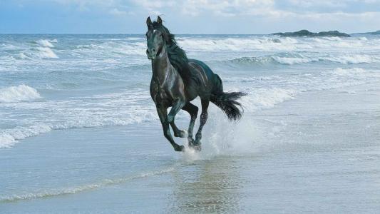 一匹马沿着海岸跳跃