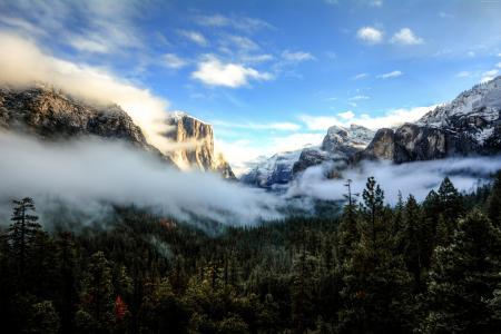 白色的薄雾覆盖在山背景的树顶上