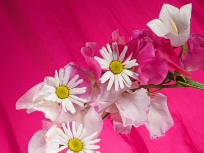 在粉红色的背景上的花束