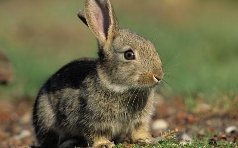 野兔之间的绿叶