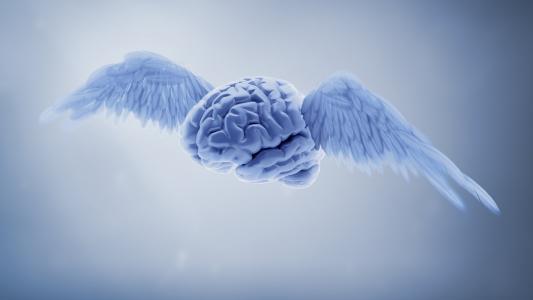 大脑与翅膀上的灰色背景3d图形