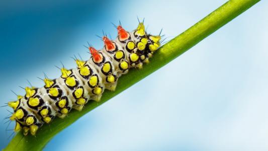 在绿色茎的明亮的毛虫