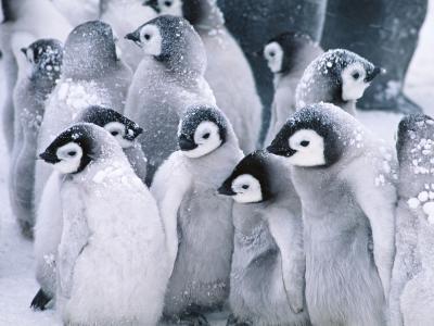 可爱的企鹅