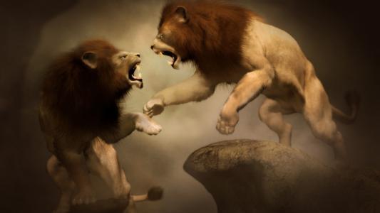 两只狮子的战斗