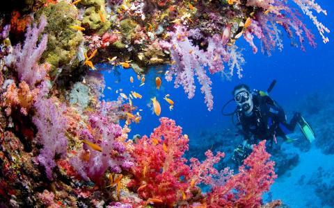 海底世界的美丽