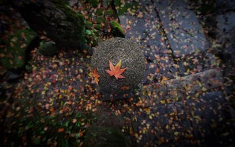 日本的秋天
