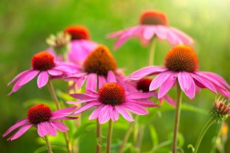 海胆亚目特写镜头美丽的花