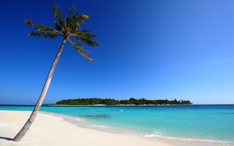 在马尔代夫的海滩