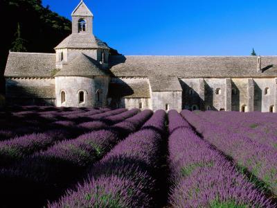 以城堡为背景的淡紫色在普罗旺斯,法国