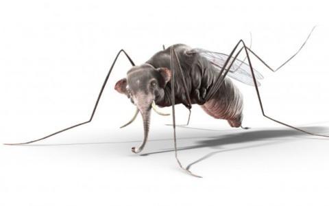 蚊子与大象头