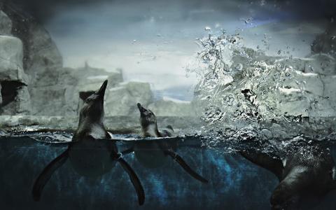 在水中的企鹅