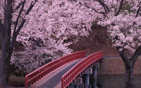 在盛开的花园里,河对面的一座桥