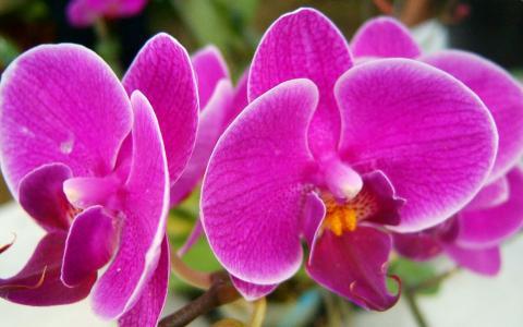 美丽的粉色花朵