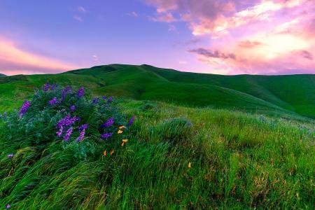 绿色的草地,加州。