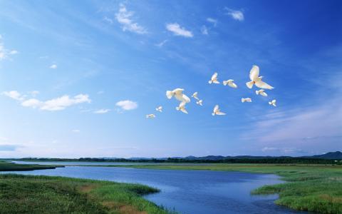 世界的鸟类