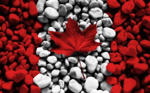 创意加拿大国旗