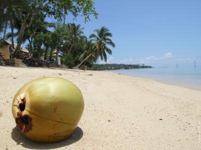 椰子在苏梅岛,泰国海滩上