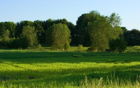 绿色的夏天领域