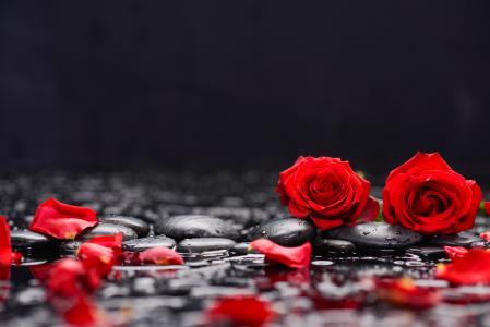 在黑色石头上的红玫瑰在水中