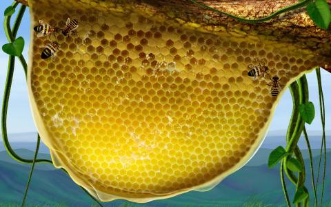 蜜蜂和蜂窝
