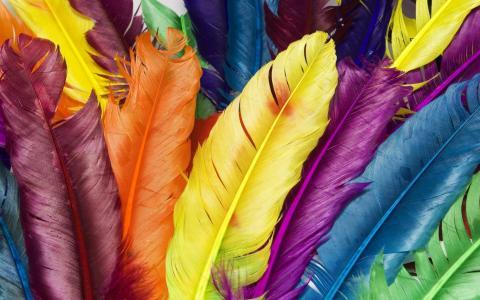 彩色的羽毛