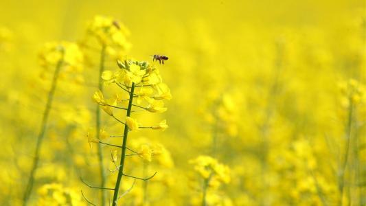黄色的花朵