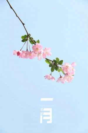 一月你好之唯美清新海棠花