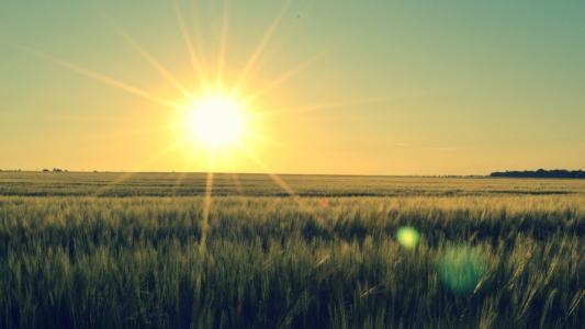 在草原的日落