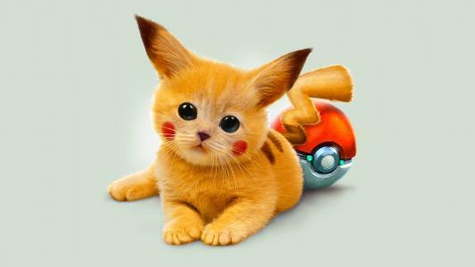 红头发的宠物小精灵小猫