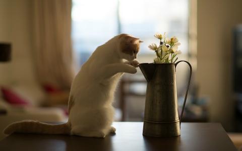 在与水罐的猫