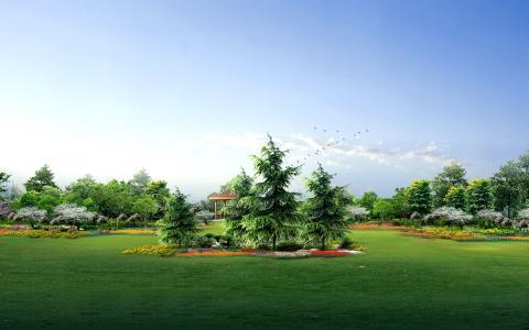 绿色的花园