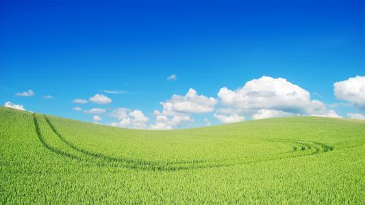 美丽的绿色景观