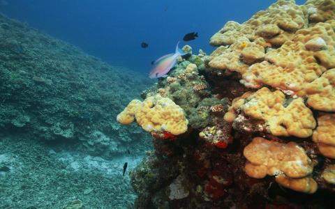 海洋的海底世界