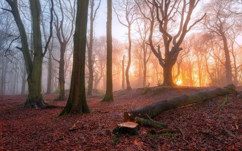 砍伐树在森林里